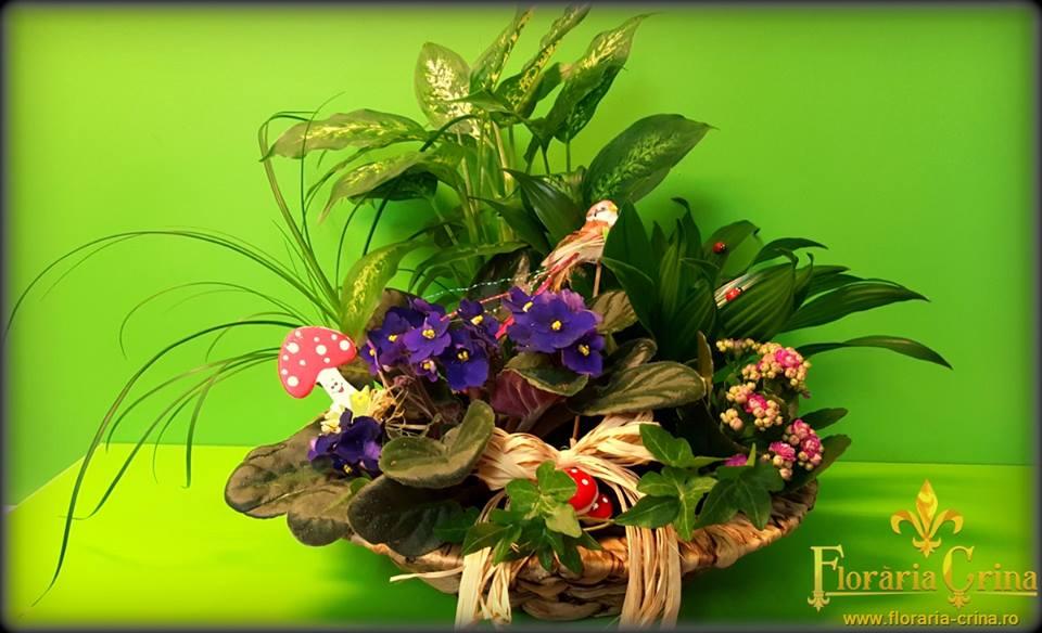 Florării Timişoara Aranjamente Florale Buchete Mireasă